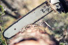 Chainsaw blade cutting log of wood Royalty Free Stock Photo