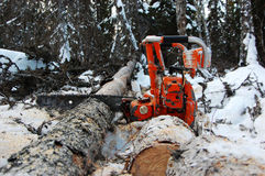 Chainsaw. The chain saw lies on the sawn trees in the winter Stock Image