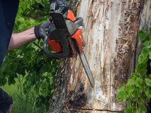 Chainsaw. Close-up of adult man with woodcutter sawing chain saw in motion, sawdust fly to sides. Chop and saw down. Trees concept stock photo