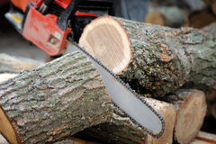 Chainsaw. Close-up of male hands cutting trunk with chainsaw stock photography