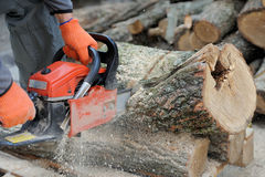 Chainsaw. Close-up of male hands cutting trunk with chainsaw royalty free stock image