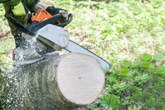 The chainsaw cutting the log. Of wood stock photo