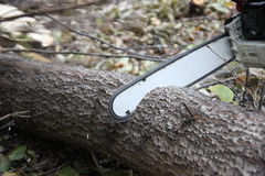 Chainsaw cutting trunk Royalty Free Stock Images