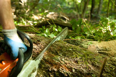 Chainsaw cutting wood. Forest worker cutting the trunk in the forest with chainsaw stock images