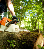 Chainsaw cutting wood. Forest worker cutting the trunk in the forest with chainsaw royalty free stock photography