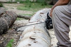 Chainsaw cutting wood. Blade of a Chainsaw cutting wood stock photo