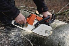 Chainsaw cutting wood Royalty Free Stock Photo