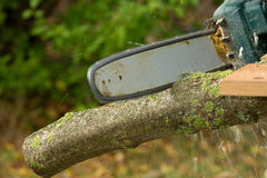 Chainsaw. A chainsaw cutting wood in the garden stock images
