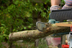 Chainsaw. A chainsaw cutting wood in the garden stock photo