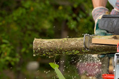 Chainsaw. A chainsaw cutting wood in the garden royalty free stock photos