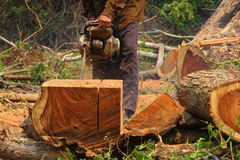 Chainsaw cutting the wood Royalty Free Stock Images