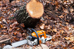Chainsaw in the forest Royalty Free Stock Photos