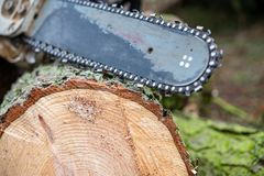 Chainsaw on fresh felled tree. Worn chainsaw on fresh felled tree stock images