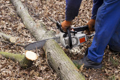 Chainsaw in a hands. Chainsaw in a hand of the lumberjack stock photography