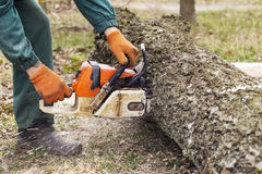 Chainsaw in a hands. Chainsaw in a hand of the lumberjack royalty free stock image