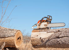 chainsaw klippt stor tree Royaltyfri Foto
