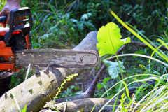 Chainsaw klippta träjournaler Royaltyfri Fotografi
