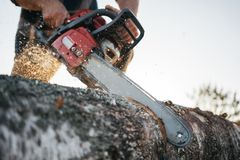 Chainsaw in lumberjack hands. Professional lumberjack sawing a big tree using chainsaw. Close-up view on chainsaw in lumberjack hands. Professional lumberjack stock image