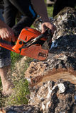 Chainsaw. Lumberjack sawing wood with red handle stock photo