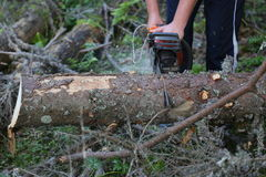 Chainsaw. Man with chainsaw cutting pieces of tree trunk in the forest stock photos