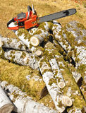 Chainsaw On Poplar Logs To Cut. An orange chainsaw is sitting on top of moss covered poplar tree branches lying on the ground Royalty Free Stock Photography