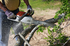 Chainsaw. Professional is cutting trees using an electrical chainsaw stock photos