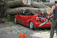 Chainsaw rescue. A car flattened by a fallen tree being rescued by an arborist royalty free stock images