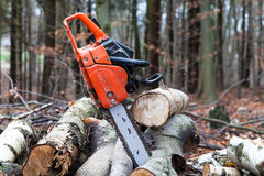 Chainsaw with sawed trees. A chainsaw in the forest Stock Photo
