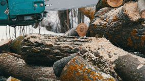 Chainsaw sawing dry wood lying on the ground stock footage