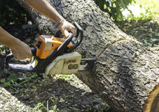 Chainsaw sawing trunk. Worker use chainsaw sawing trunk in the forest royalty free stock image