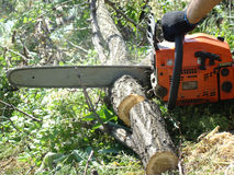 Chainsaw. Sawing wood with a chainsaw,cut firewood for the winter Royalty Free Stock Photography