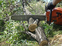 Chainsaw. Sawing wood with a chainsaw,firewood,cutting stumps Royalty Free Stock Photo