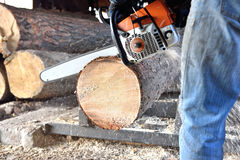 Chainsaw sawing wood Royalty Free Stock Image