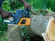 Chainsaw som klipper det stupade trädet royaltyfria bilder