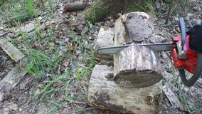 Chainsaw som sågar en journal arkivfilmer