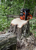 Chainsaw on a stump. Of a recently sawed down tree stock photo