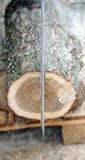 Chainsaw and tree royalty free stock image