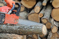 Chainsaw and tree royalty free stock photography