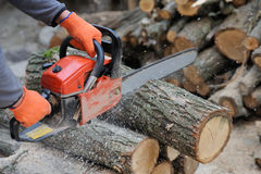 Chainsaw and tree stock image