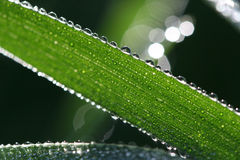 Chainsaw of waterdrops. Picture of waterdrops, macro on morning grass stock photography