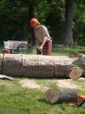 chainsawing упаденные lumberjacks укомплектовывают личным составом вал Стоковые Фото