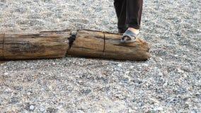 Chainsawsawingträ Man sågar en journal med en chainsaw som bärs av havet under en storm långsam rörelse lager videofilmer