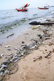 Pollution on the beach after plankton blooming phenomena Stock Images
