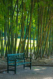Chair in bamboo park. Stock Photography
