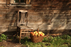 Chair and basketful of apples Stock Images