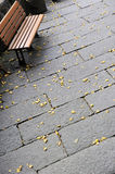 Chair and fallen leaves in autumn Stock Photography