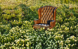 Chair in a field of flowers Royalty Free Stock Photography