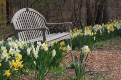 Chair in Flower Garden. In early spring Stock Photos