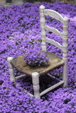 Chair in flowers Royalty Free Stock Photos