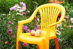 Chair in the garden. Three apples on a chair in the garden next to the flower beds Royalty Free Stock Photos